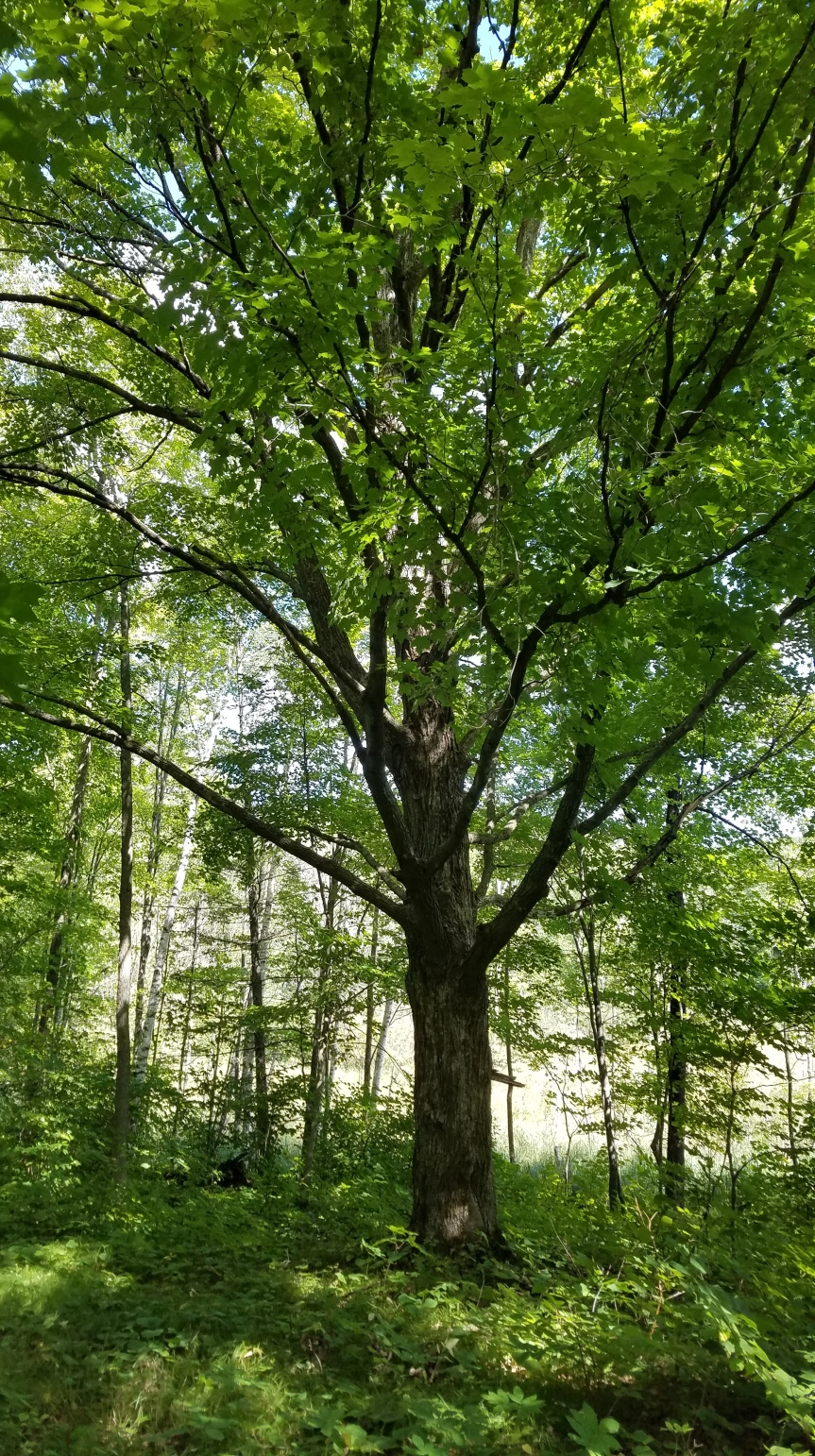 Public input: Forestry meeting- Tuesday October 27th @6:00PM